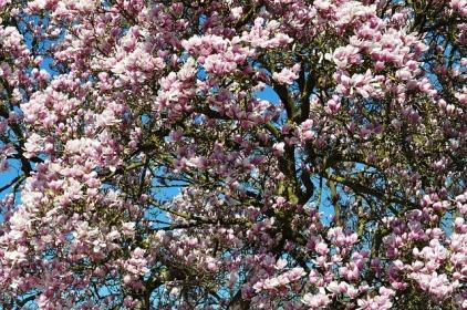 spring-211635_640